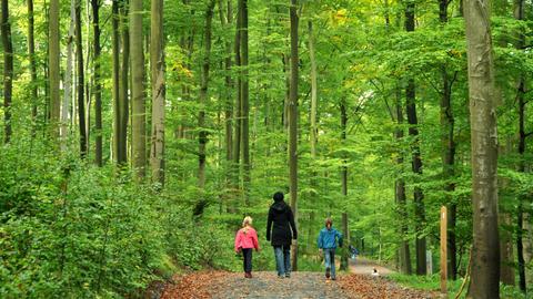 Spaziergänger im Nationalpark Kellerwald-Edersee