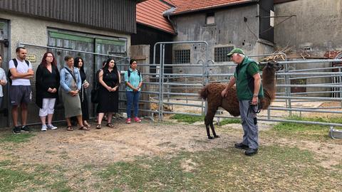 Eine Gruppe Auszubildender wandert mit Lamas und Alpakas