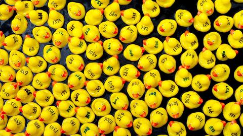 Entenrennen - gelbe Badeenten mit Ziffernbeschriftung