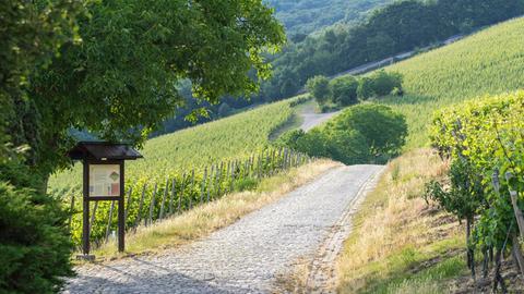Wanderweg am Steinberg in Eltville