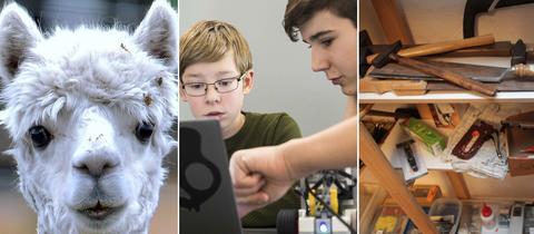 Collage: Alpaka, Schüler programmieren, Werkzeug