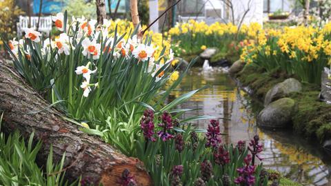 Frühlingsausstellung im Frankfurter Palmengarten