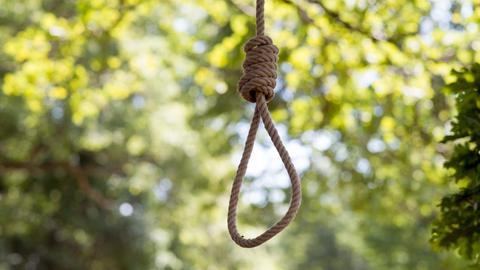 Ein Seil mit einem Henkersknoten hängt an einem Baum