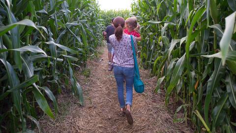 Eine Frau trägt ihr Kleinkind auf dem Arm durch ein Mais-Labyrinth