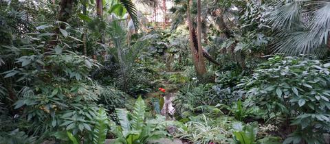 Blick in das Palmenhaus im Palmengarten