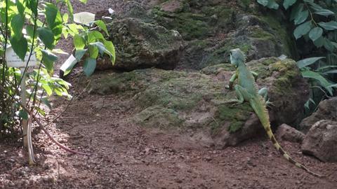 Wasseragame in einem Tropenhaus des Palmengartens