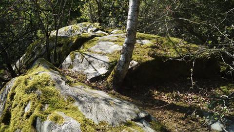 Felsengruppe im Wald