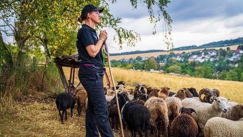 Taunusschäferin Nicole Hegetö mit Schafherde