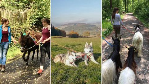 Collage: Trecking mit Eseln, Lamas, Ziegen