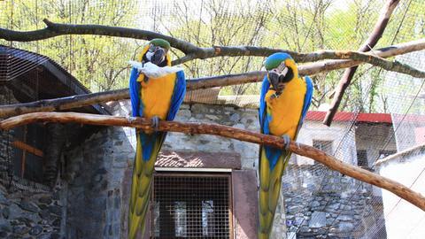 Papageien auf der Vogelburg