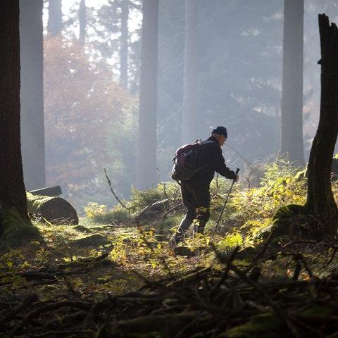Mann wandert in einem Wald an den Hängen des Großen Feldbergs