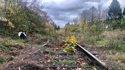 Mit Gräsern und Sträuchern überwachsene Bahngleise