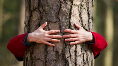 Arme umschließen einen Baum