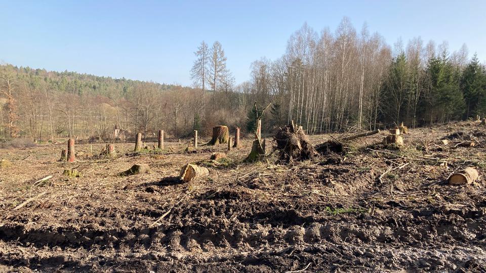 Waldfläche mit Schneise voller Baumstümpfe