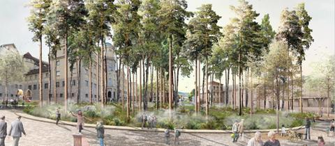 Architektenentwurf: Kiefern stehen wie ein Wald auf dem Grimm Platz