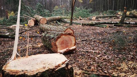 Gerodete Flächen im Dannenröder Forst