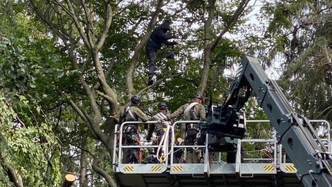 Ein Aktivistin wird von Spezialkräften der Polizei vom Baum geholt