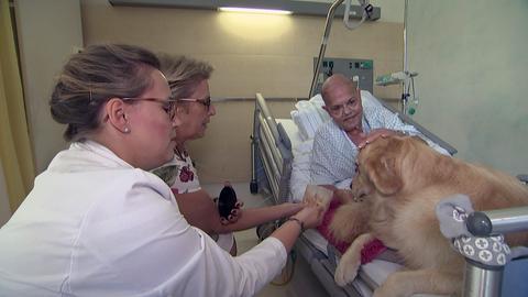 Hund im Krankenhaus