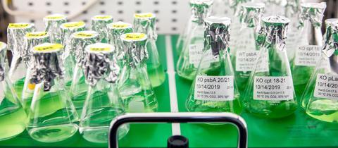 Erlenmeyerkolben mit einer grünen Flüssigkeit in Reih und Glied in einem Labor.