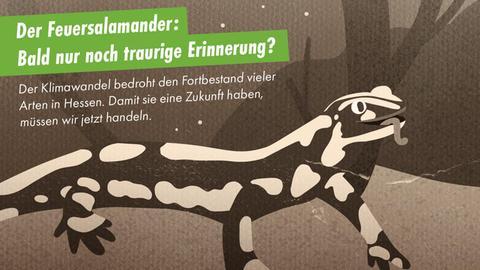 """""""Der Feuersalamander: Bald nur noch traurige Erinnerung?"""""""