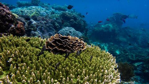 Korallenriff im Meer