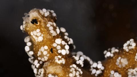 Nahaufnahme einer Koralle mit Plastikpartikel