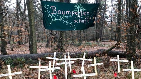 Kreuze für gefällte Bäume im Dannenröder Forst