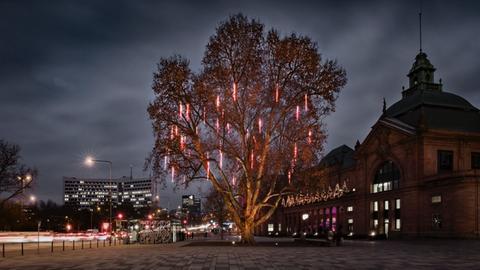 Beleuchtete Platane vor dem Bahnhof in Wiesbaden bei Nacht