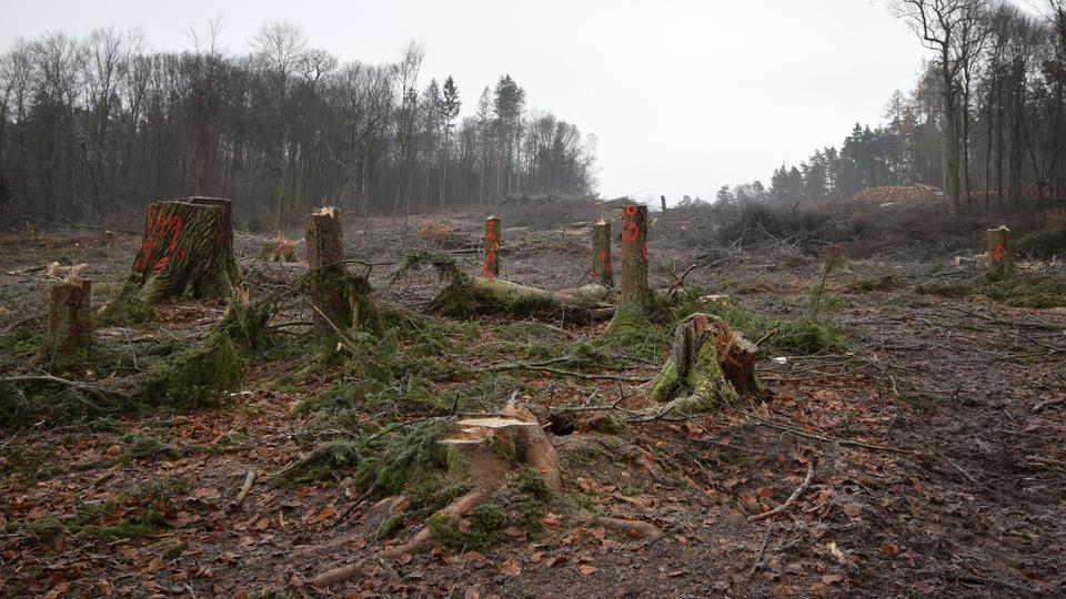 Die Rodungsschneise im Dannenröder Forst für den A49-Ausbau.