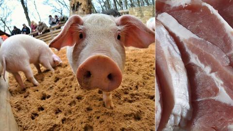 Schweine im Tierpark / Billigfleisch im Supermarkt