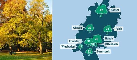 Übersicht: So viele Stadtbäume gibt es in Hessens großen Städten