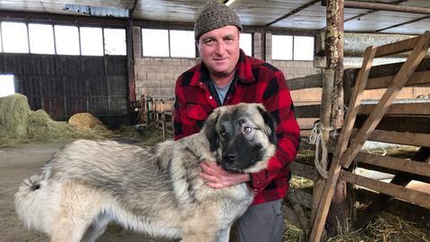 Mann mit großem Hund in Stall