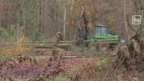Die Rodung im Danneröder Forst geht voran.