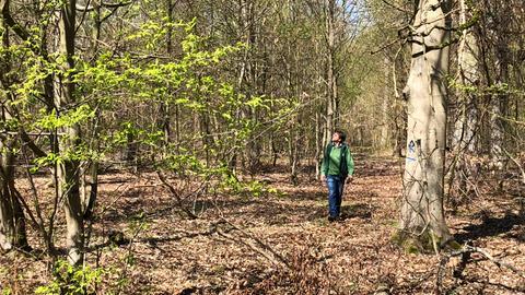 Experte läuft durch Wald