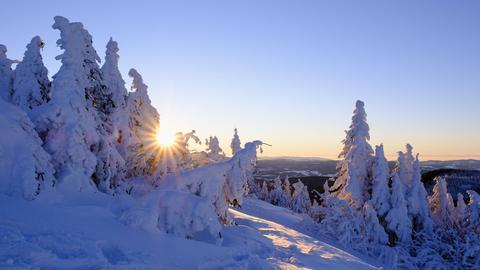 Sonne scheint durch schneebedeckte Nadelbäume