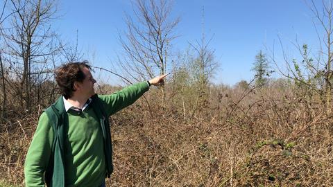 Schäden im Wald bei Gernsheim