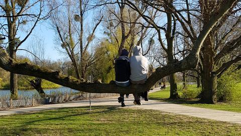 Ein Paar sitzt auf einem Baum