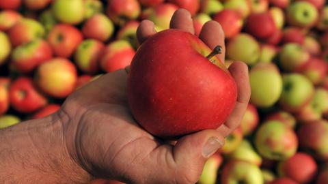 Eine Hand mit einem Apfel