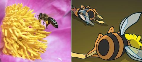 Kombo: Biene auf einer Blüte und Ausstellungsplakat