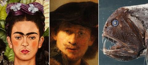 Collage: Selbstbildnisse Frida Kahlo, Rembrandt sowie ein Tiefseefisch