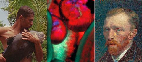 Collage Ausstellungsherbst