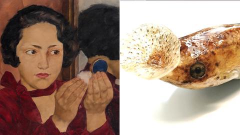 """Collage: Lotte Laserstein """"Russisches Mädchen mit Puderdose"""", 1928 / Larvenstadium eines Zipfelkrötenfrosches"""