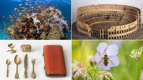 Collage mit Fotos einiger Ausstellungen, die im Juni starten. Korallenriff, Colosseum, Schwebfliege an Blume