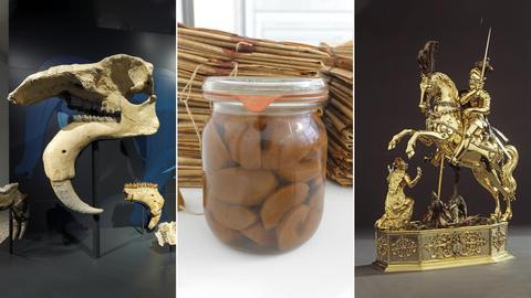 """Drei Fotos zeigen außergewöhnlichs Stücke der Sammlung: das Skelett eines """"Schreckenstiers"""", ein Kunstwerk von Beuys in Form eines Einmachglases und ein"""