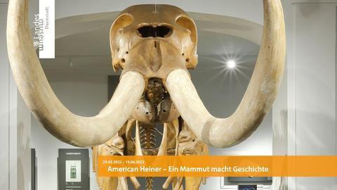Webseite des Hessischen Landesmuseums Darmstadt mit Mammut-Skelett