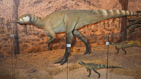 Dinosaurier Kassel