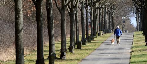 Spaziergänger auf einer Allee aus Beuys-Bäumen in Kassel