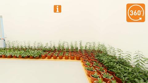 """Feld mit Indigo-Pflanzen - Teil der Installation """"Fundi"""" von Aboubakar Fofana"""