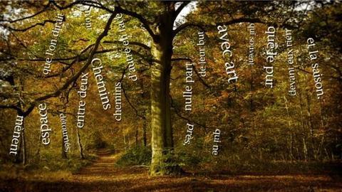 Ein Wald - darauf scheweben französische Wörter in weißer Schrift