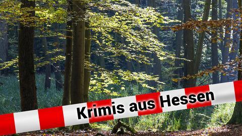 Waldstück bei Frankfurt